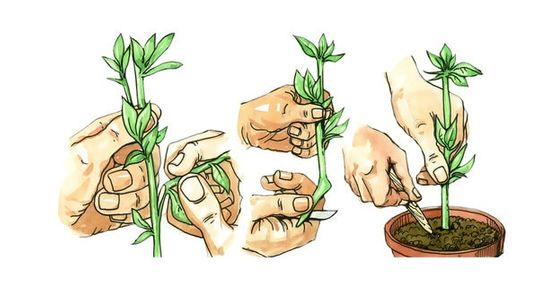 Plant Cuttings Example